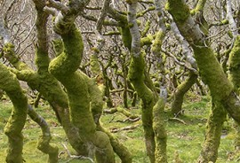 Our in-house arb consultants offer bespoke arboricultural consultant services