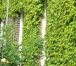 Green Roofs and Green Infrastructure at a Landscape Scale