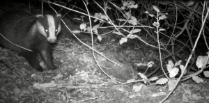 Badger time pahse camera