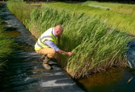 Senior ecologist Danny inspects phragmites at a River and Wetland Management Conference