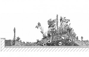 Green_Infrastructure_Green_Roof_cross_section_Chobham_Manor