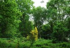 Arboricultural Services - Tree Surveys and Reports