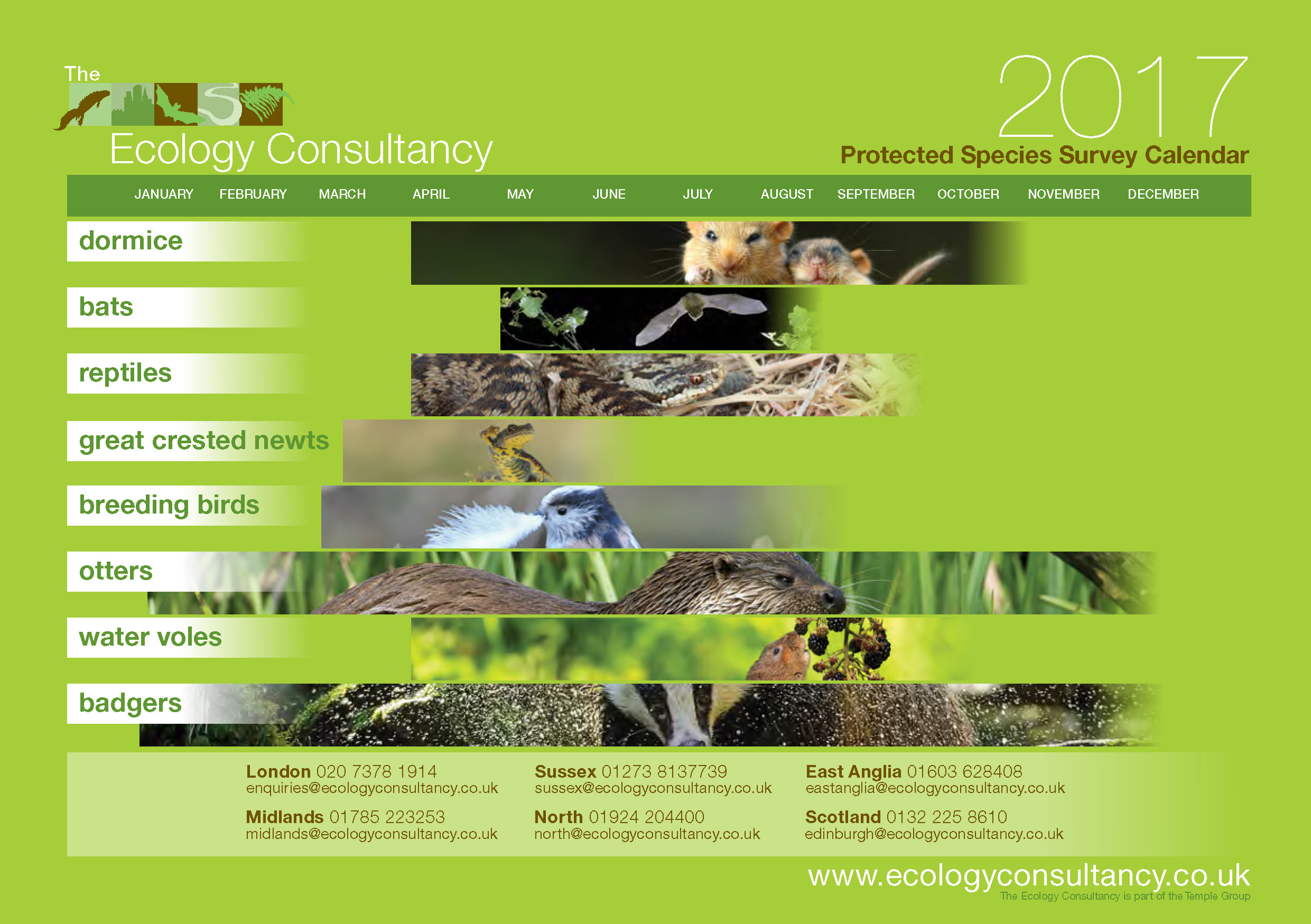 Protected Species Survey Calendar The Ecology Consultancy