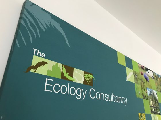 Ecology Consultancy rebrands as The Ecology Consultancy