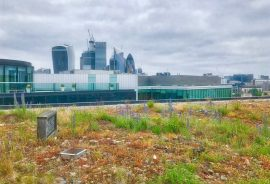 Green roof near London Bridge