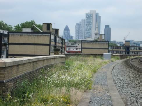 Wildflower verge on the East London Line north of Shoreditch