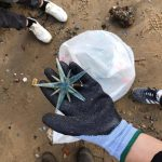 Beach Clean on the Thames as part of environment week