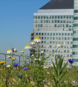 Biodiversity net gain - green roof